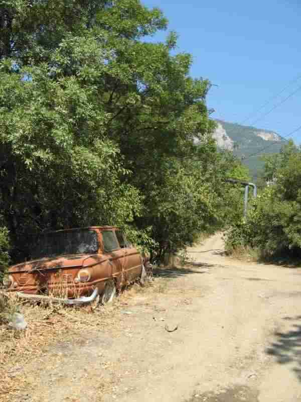 Рассада помидор в грунт 64